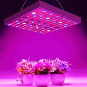Фито светильники